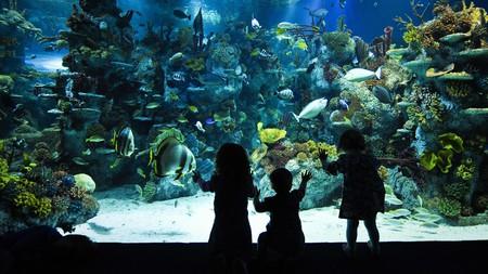Aquarium, Bristol