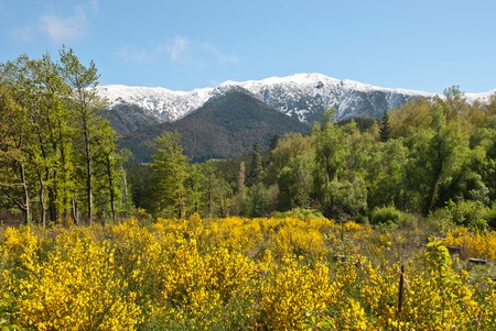 Spring in Hanmer Springs, Cantebury, NZ, with snow covered peaks, bright yellow gorse blossom and blue skies.