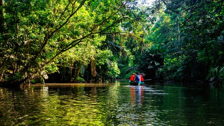 Take a canoe through the mangroves of Tortuguero to see unique flora and fauna