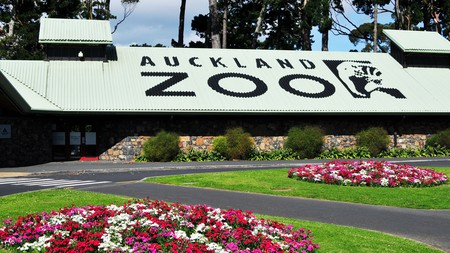 Children can go on a night safari and become junior zookeepers at Auckland Zoo