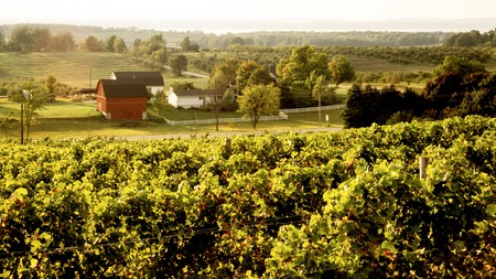 Chateau Chantal vineyards on the Old Mission Peninsula looking toward Grand Traverse Bay, Michigan, USA