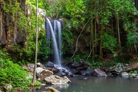 Curtis Falls in Tamborine National Park, Queensland, Australia