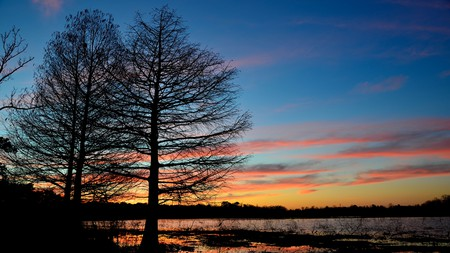 Cypress trees standing by Lake Houston in a sunset
