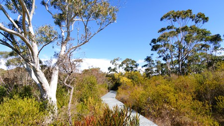 Dharawal National Park is home to beautiful flora and fauna
