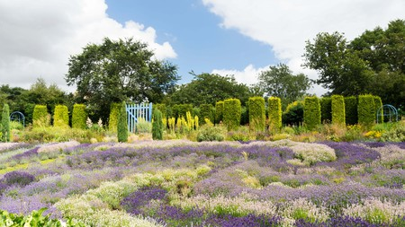 Yorkshire Lavender is just one of York's many enchanting green spaces