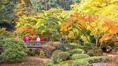 Autumn brings changing color, visitors and photographers to Portland's famous Japanese Tea Garden