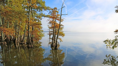 Reelfoot Park was once a forest which has since flooded, meaning you'll see cypress trees poking out from the water line
