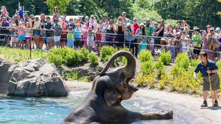 Elephant in the water at the Portland Oregon zoo