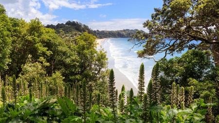 Auckland's many beaches dot the vast coastline along the Pacific Ocean and the Tasman Sea