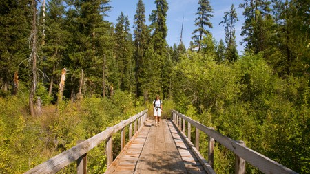 The splendid forests in the state of Washington offer the perfect natural haven for outdoor enthusiasts