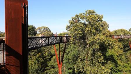 The Xstrata Treetop Walkway in Kew Gardens