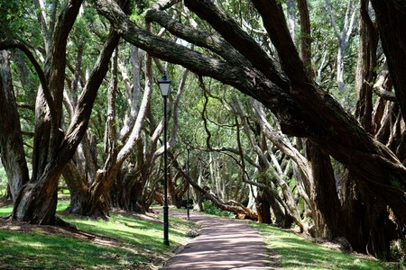 New Zealand Auckland - City park Auckland Domain walkway