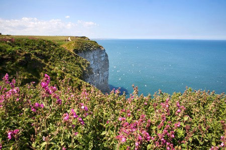 Bempton Cliffs East Riding of Yorkshire England