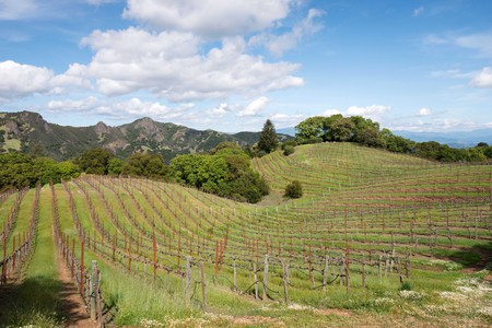 Sonoma is known for its excellent wines and rolling hills