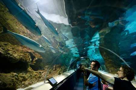 People interact with school of fish in Kelly Tarlton sea life Aquarium in Auckland New Zealand