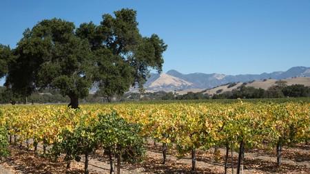Rolling hills of vineyards, tasting rooms and sprawling wine estates make Santa Barbara a wine lover's dream