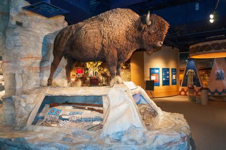 Elk203-6291 Canada, Alberta, Calgary, Glenbow Museum, exhibit. Image shot 08/2010. Exact date unknown.