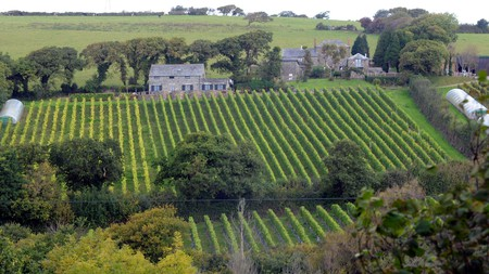 England's vineyards have been earning accolades on the international stage in recent years