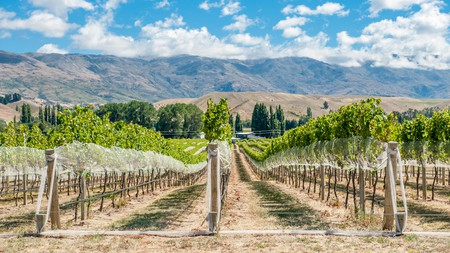 Gibbston Valley is one area to check out when touring vineyards and wineries in New Zealand