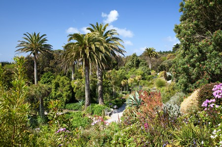 The tropical gardens on Tresco, Isles of Scilly, Cornwall, England.