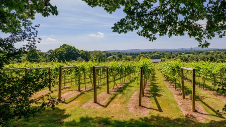 Sussex is home to some incredible wineries and comfortable Airbnbs