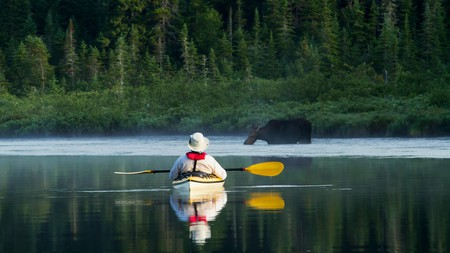 See wild moose from the comfort of your kayak at Quebec's stunning La Mauricie National Park