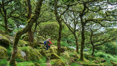 The otherworldly Wistman's Wood is one of the most unusual places to visit in Devon