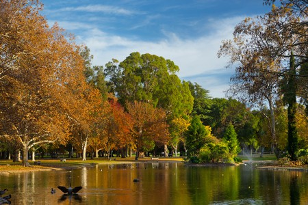 William Land Park, in Sacramento, is a great spot to see the trees in all their dazzling fall colors