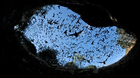 Visit Bracken Cave to see the largest bat colony on earth