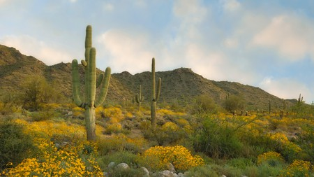 When in Phoenix, Arizona, make sure to check out the desert and its impressive Saguaro cacti
