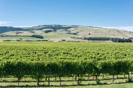 The Crater Rim Winery vineyards, Waipara, North Canterbury, Canterbury Region, New Zealand