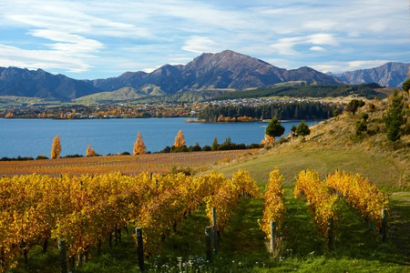 Central Otago, home to Rippon Vineyard and Lake Wanaka, is one of New Zealand's top wine regions