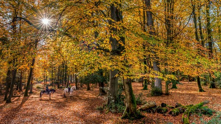 The UK is home to a range of enchanting woodlands, such as the New Forest in Hampshire
