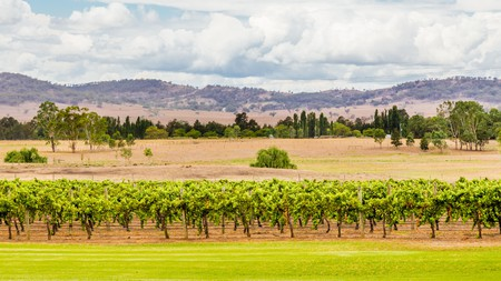Hunter Valley, Australia, was established as a wine region in the mid-19th century