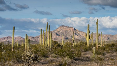 Arizona's Organ Pipe Cactus National Monument, a thriving biosphere reserve, lies within easy reach of Phoenix