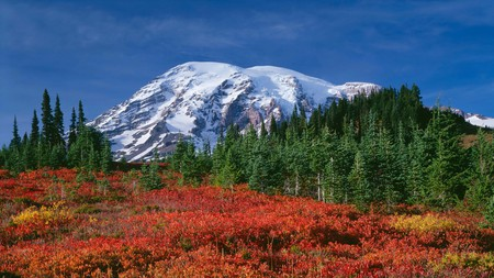 See fall colors in all their glory in Washington state