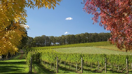 Wineries are scattered in between verdant hills and tiny towns in the Southern Highlands, Australia