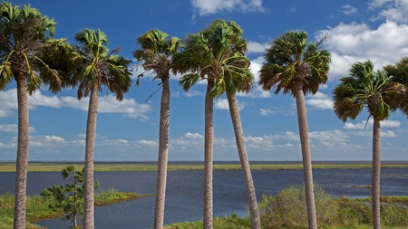Okeechobee's motels and big-name hotels make a great base for all the outdoor activities at Lake Okeechobee
