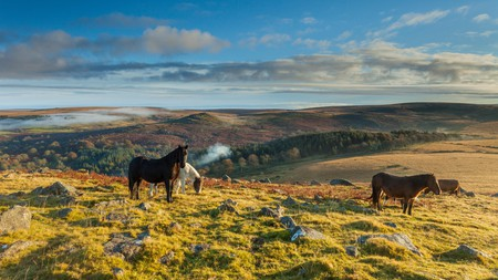 Seeing Dartmoor ponies is one of many highlights in the Dartmoor National Park