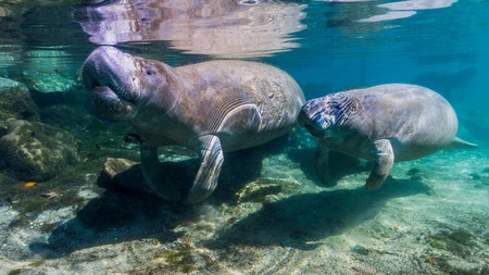 Chill with the manatees in Crystal River State Park