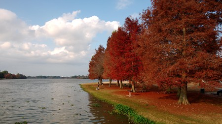 In Louisiana, the best time for fall foliage is around the end of October