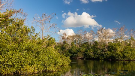 Explore Everglades National Park, North America's largest subtropical wilderness, while based at a comfy nearby hotel