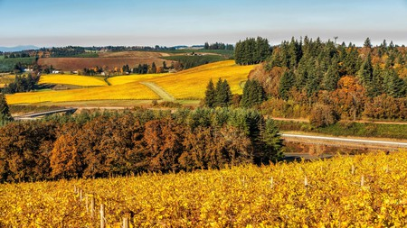 If the majestic fall colors aren't enough to tempt you to the Willamette Valley, perhaps the award-winning vineyards will be