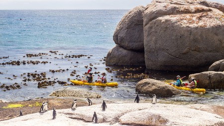South Africa is one big game reserve, and Cape Town has an abundance of wildlife to delight visitors. Head to Boulders Beach for the day, and you can hang out with its resident colony of African penguins