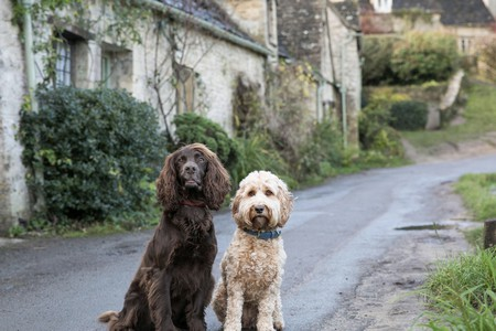 The Cotswolds makes for the perfect getaway for you and your pups