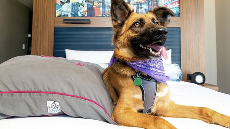 Find your perfect pet parlour