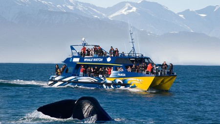 A boat trip to see whales off the shores of Kaikoura in the South Island is just one of the special outdoor experiences New Zealand has to offer