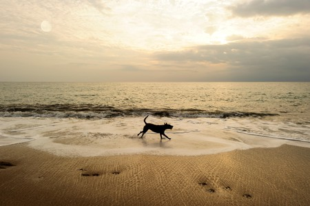With dog-friendly beaches, vast parks and tons of outdoor restaurants, Miami is a paradise for those traveling with pups