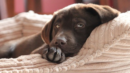 The many pet-friendly hotels in Boston mean that your four-legged friend won't be left out