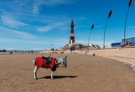 It wouldn't be a British holiday without a donkey ride on Blackpool beach